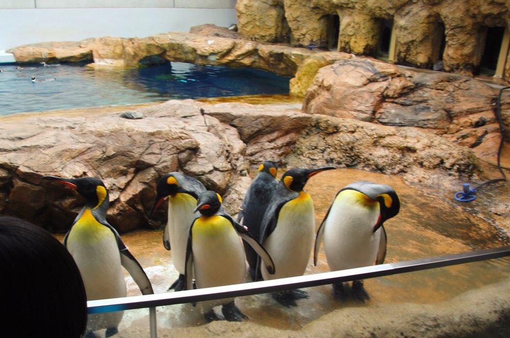 ペンギンもいます