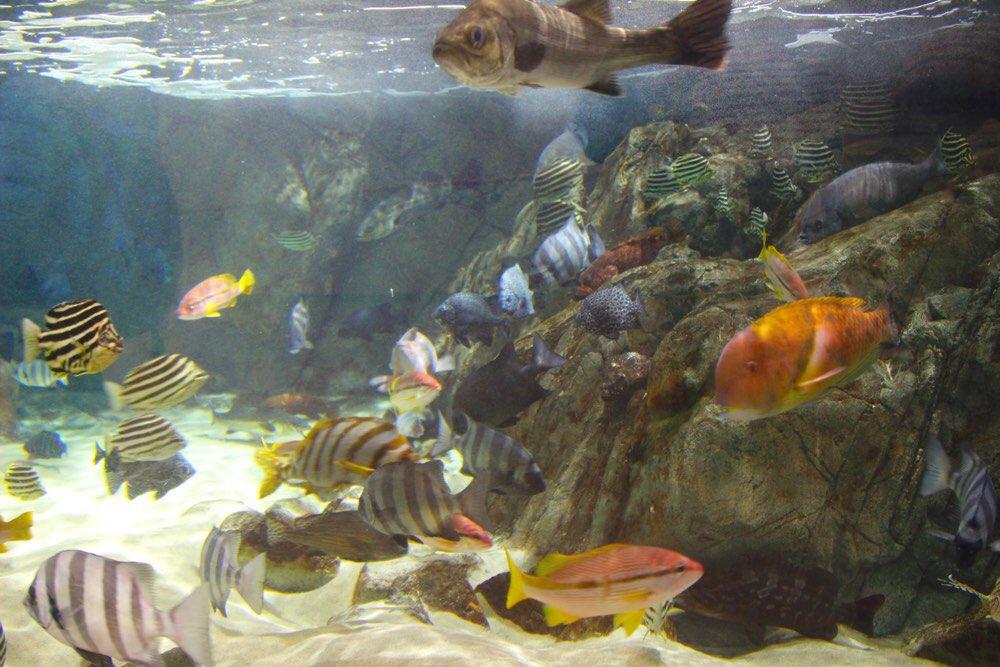 岩見の海の魚