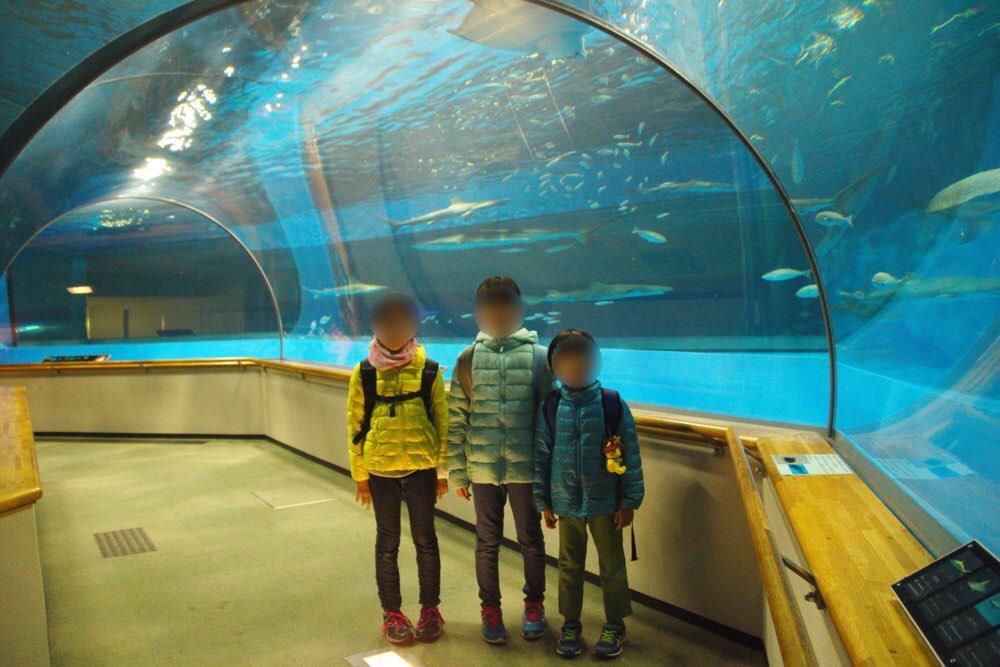 トンネル状の水槽