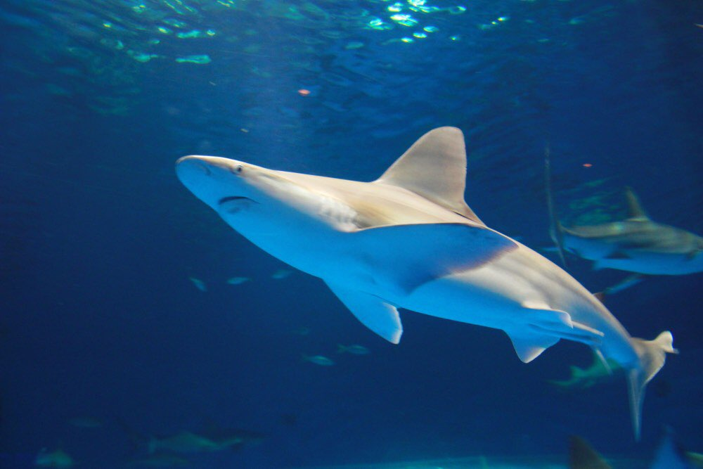 サメが真上を