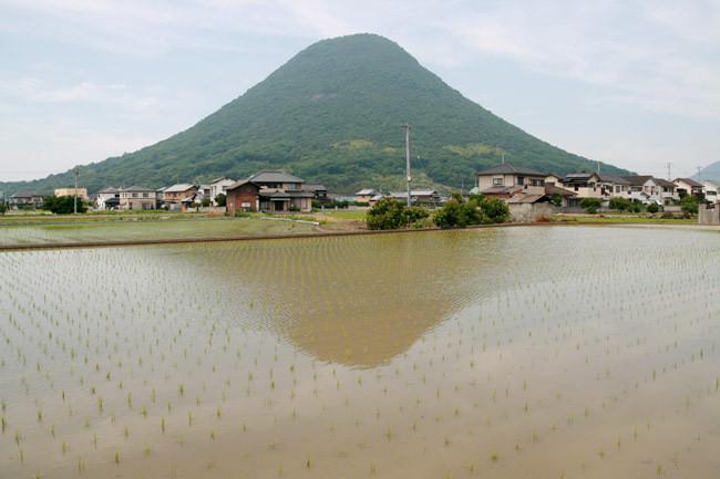 水田 feat.「讃岐富士」と呼ばれる美しい山