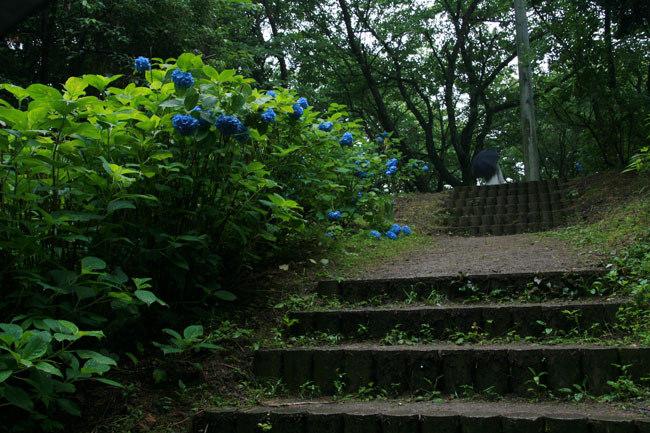 階段を登る。