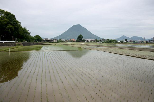 飯野山と水田その2