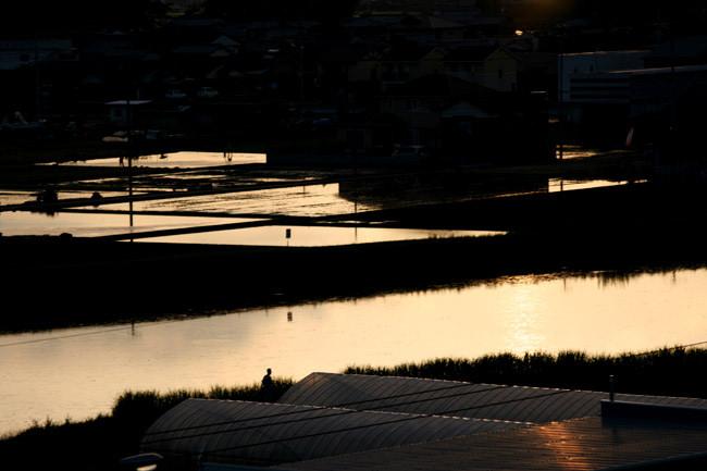 夕焼けに照らされた水田も最高