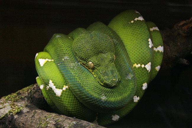 めっちゃきれいな蛇。