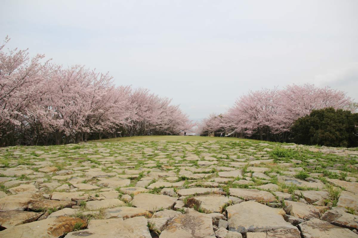 岩で作られた足元と向こうに見える桜がなんともイイ感じ