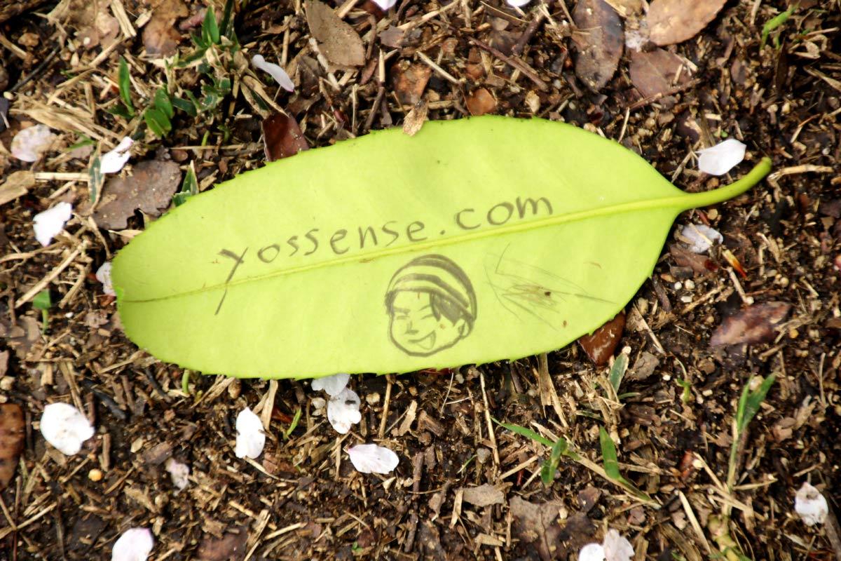 タラヨウの葉に落書き