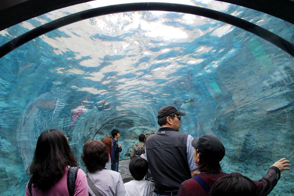 美しい水のトンネルを通る