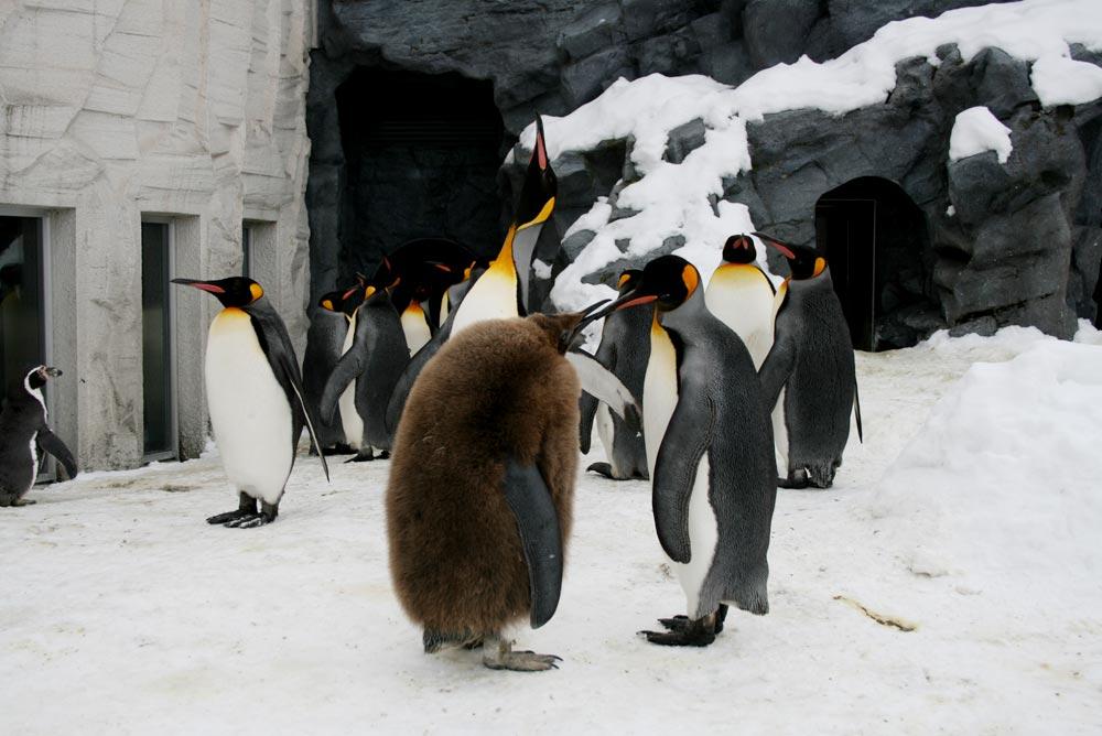 ペンギンと雪はやっぱり似合うね