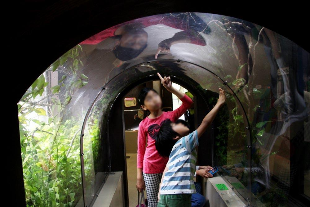 蛇のトンネル