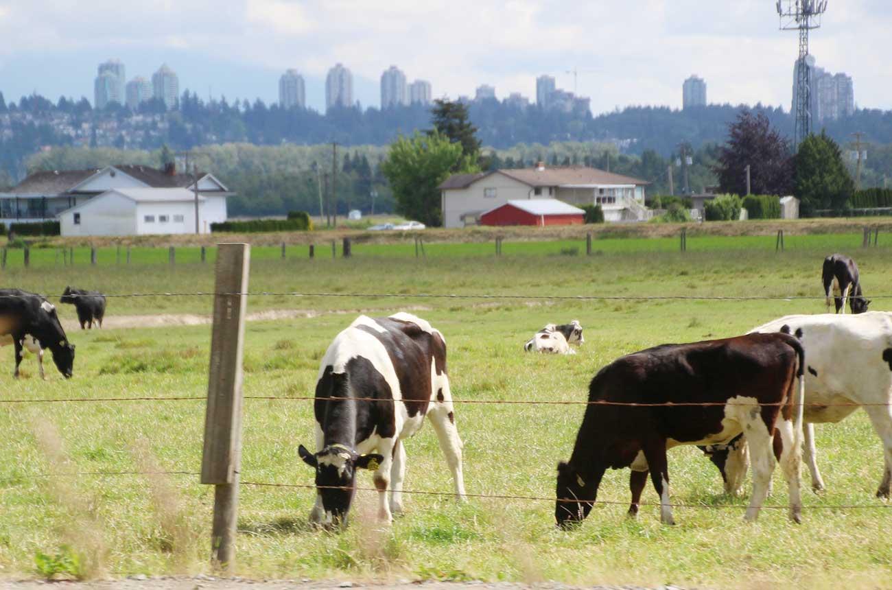 リッチモンドの田園風景