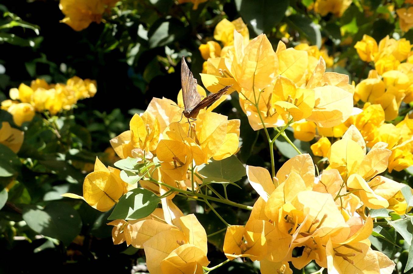 黄色くてきれいな花