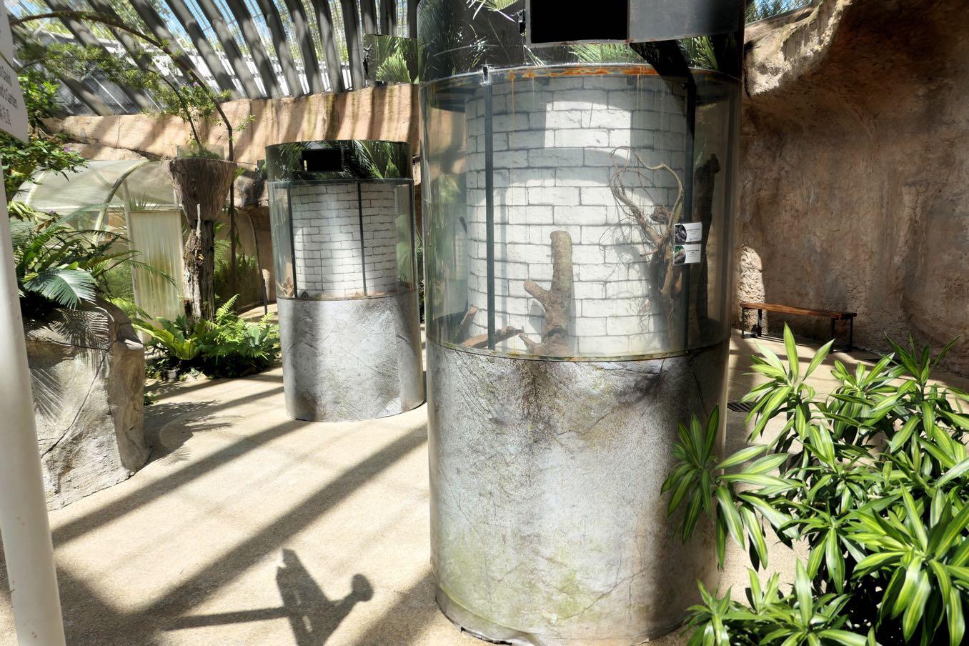 トカゲやヤモリの水槽