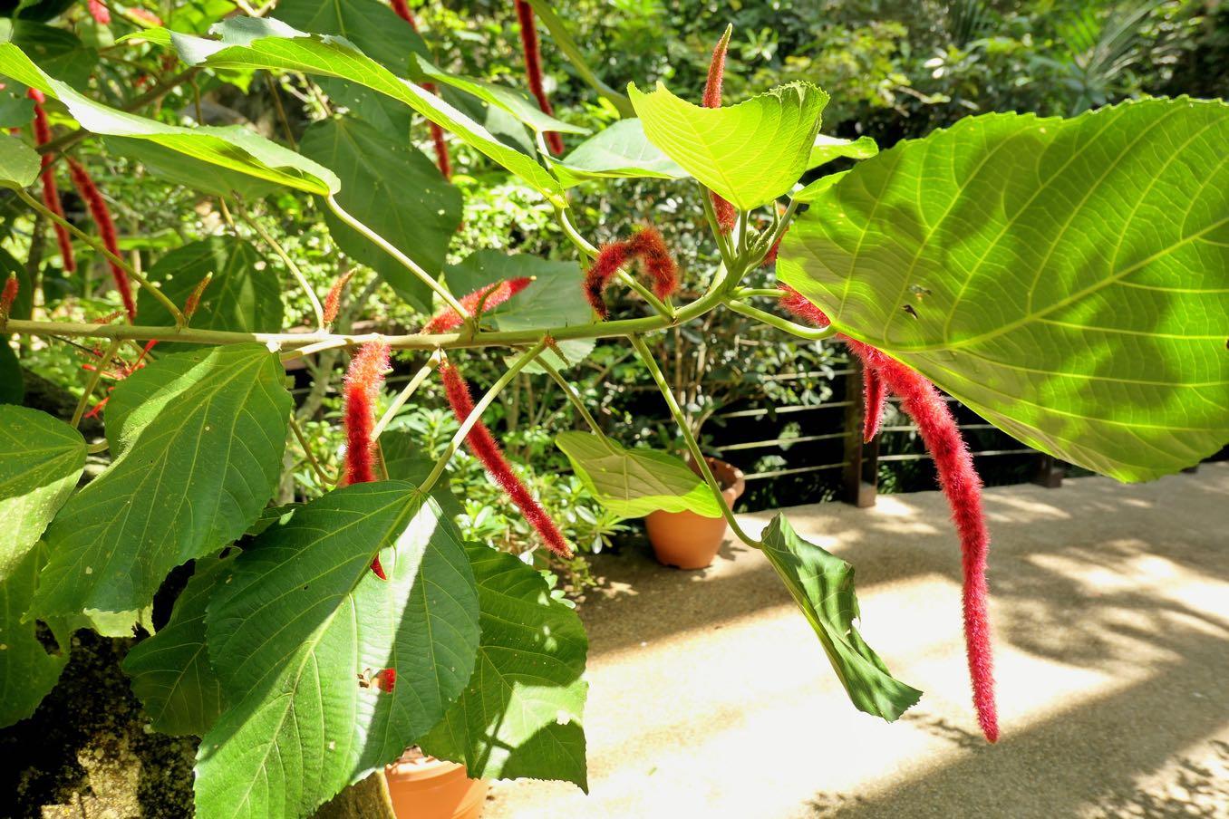 Aroma Trailの植物