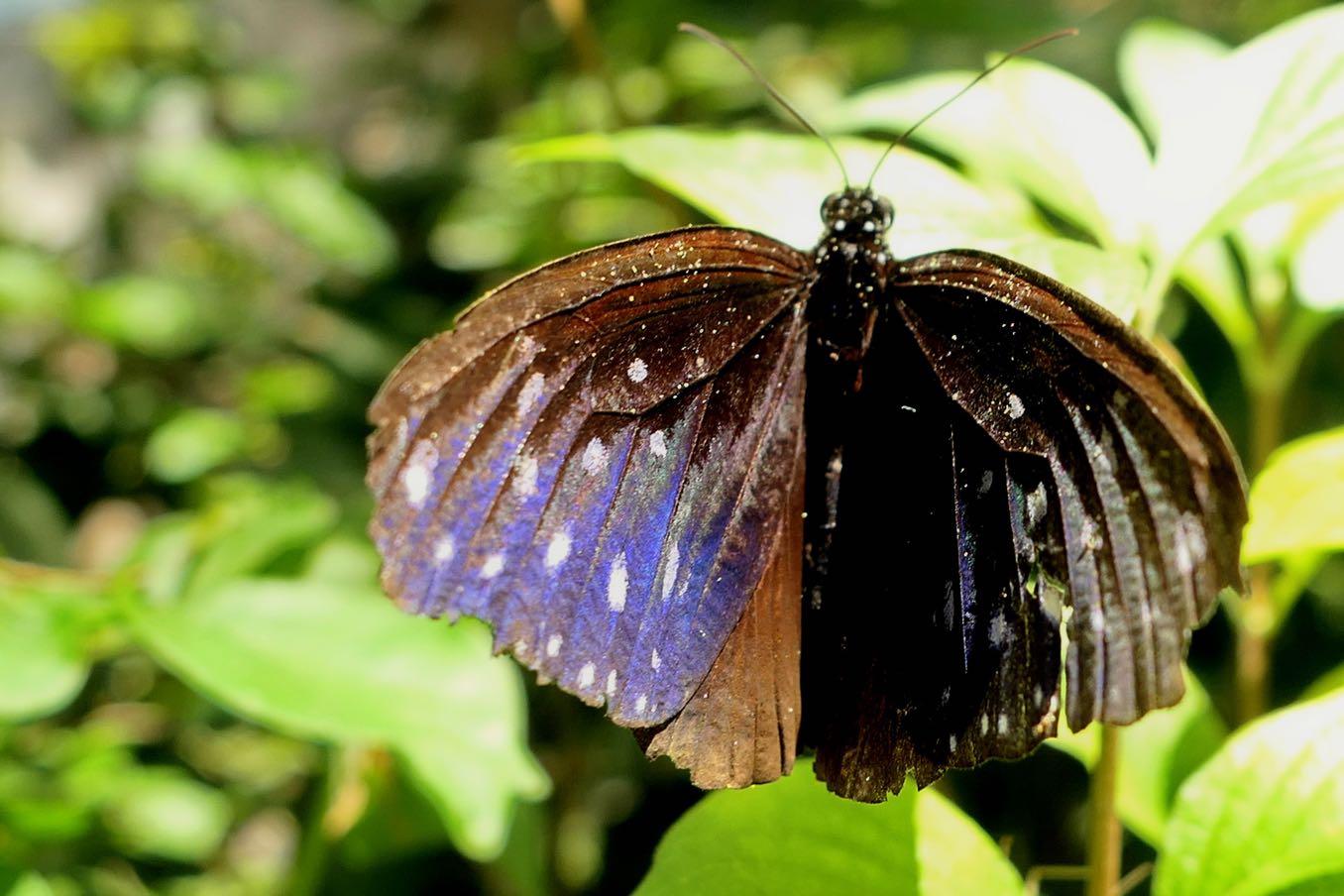 紫のきれいなチョウ