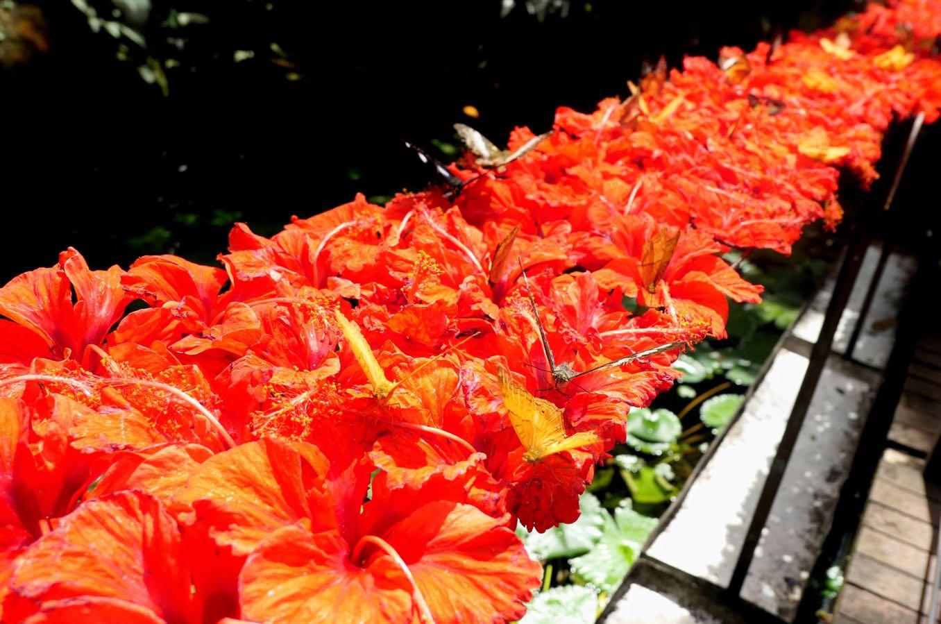 お花をエサとして配置している