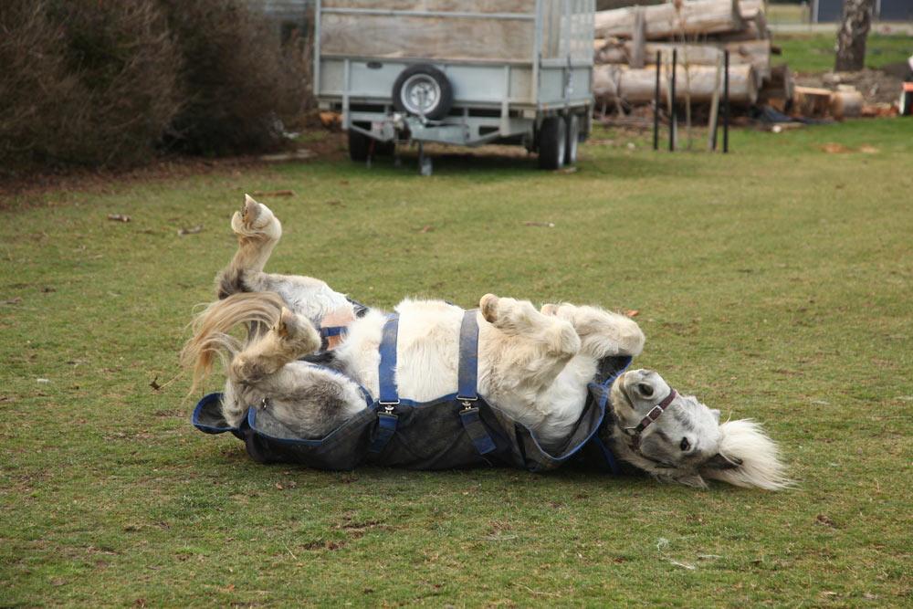 馬がネコのように寝転がる!