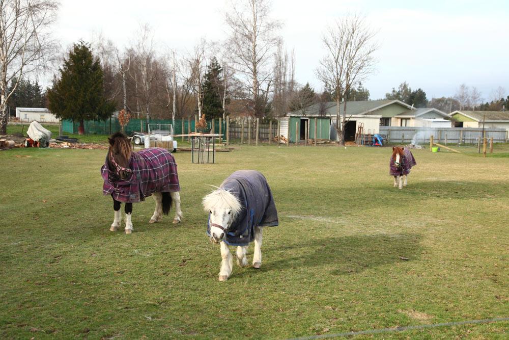 服を来た馬