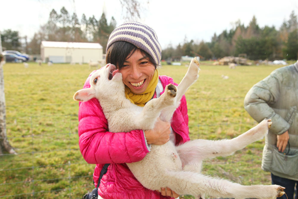 生まれて2週間ぐらいの羊を抱っこしたよ