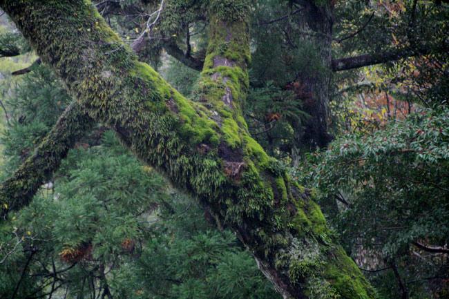 もののけ姫が出てきそうな木々