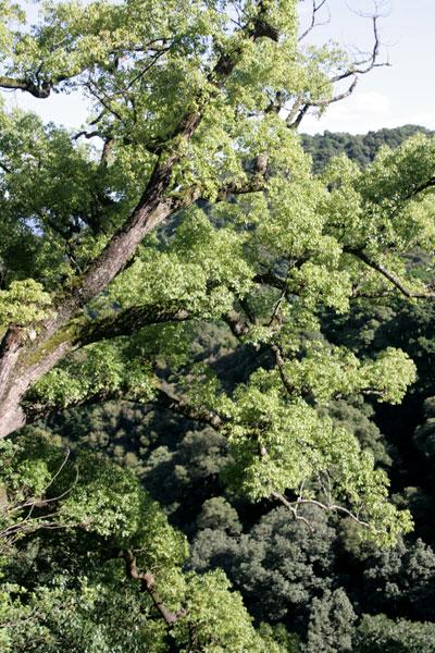 立派な木が見えます