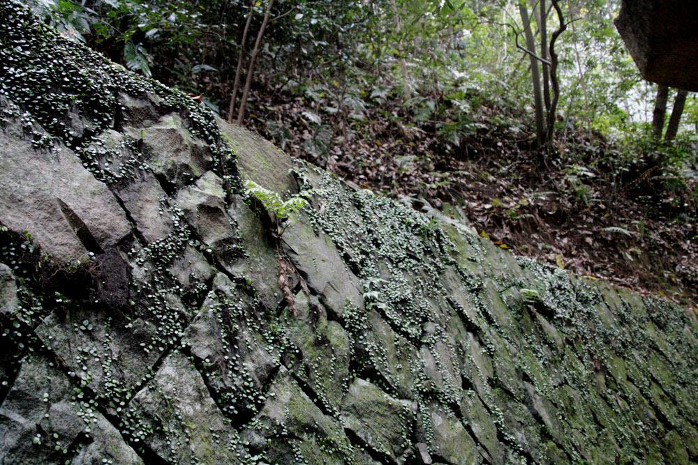 石にくっついている植物