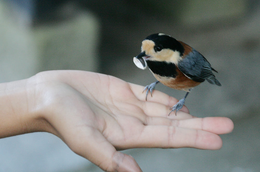 鳥が手に乗ってきた