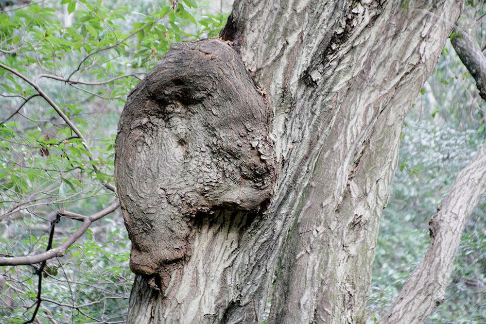 子グマが木を登ってる!