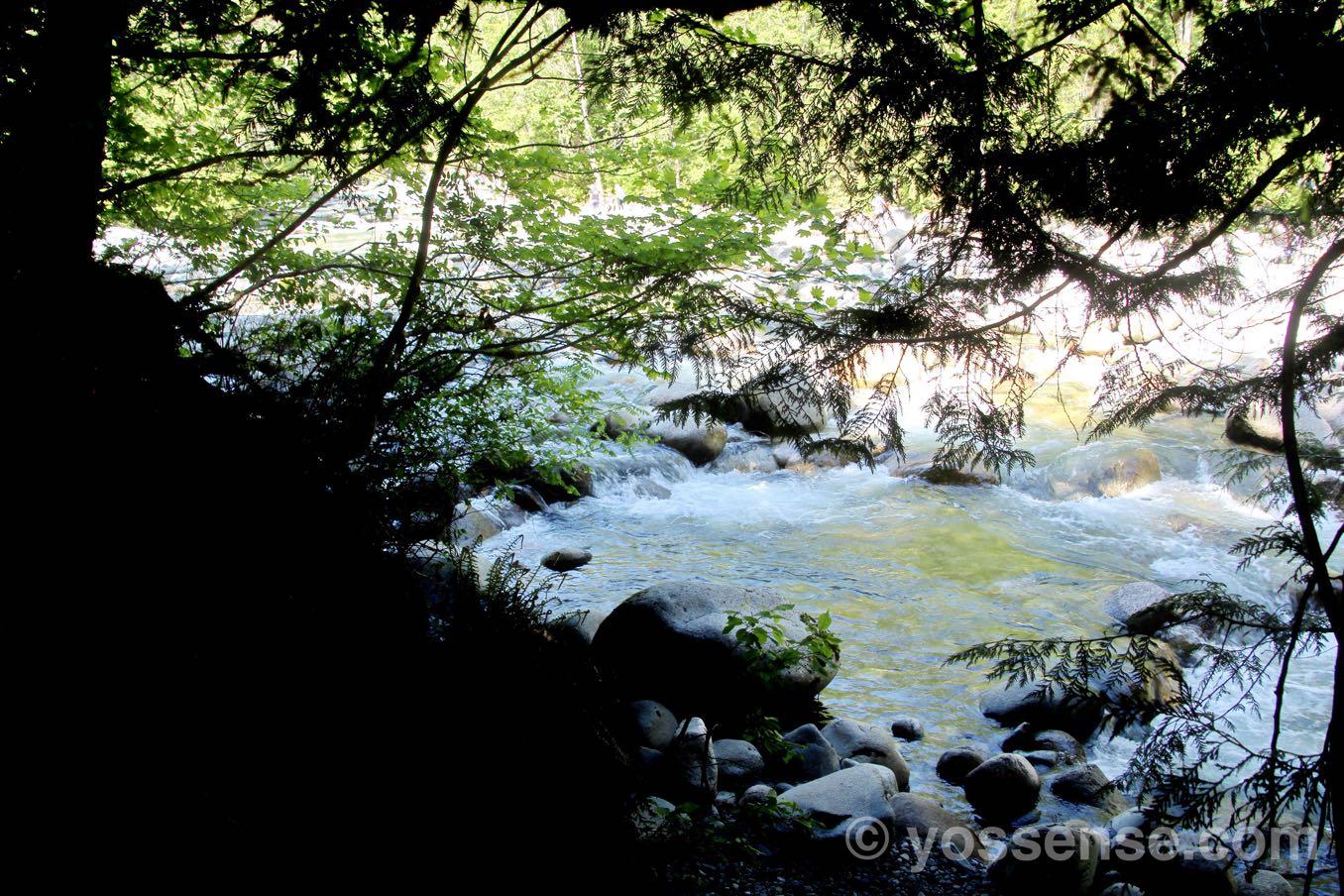 木を通して見える川がきれい