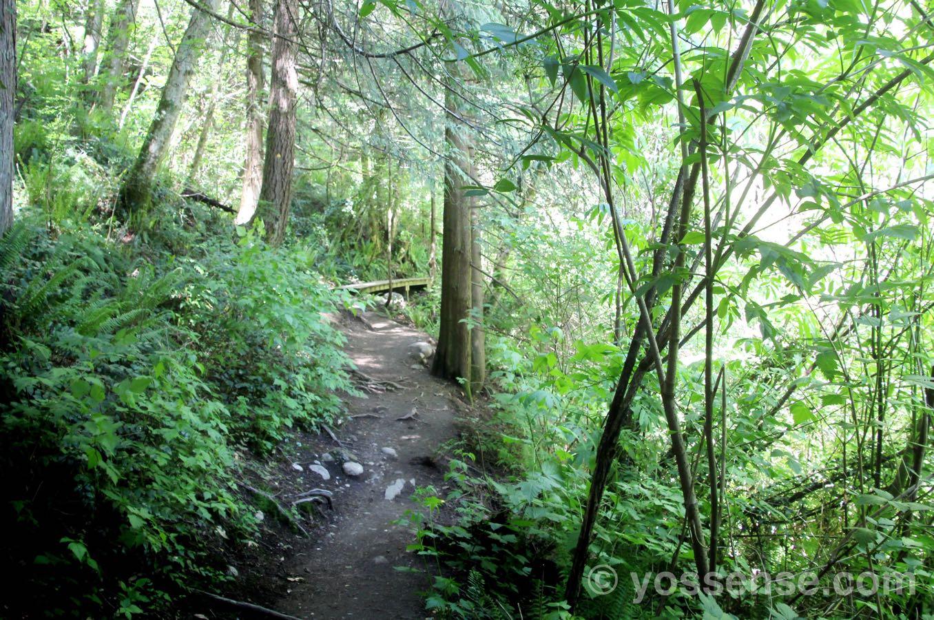いかにも「森」という感じ
