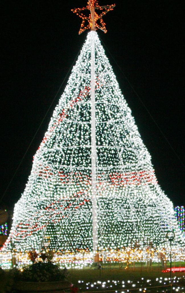 高さ10メートルのシンボルツリー