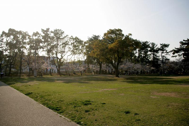 資料館前広場にも桜がいっぱい咲いています