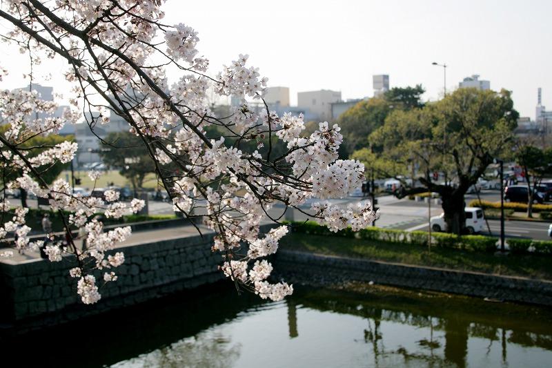 桜+堀+都心の景色