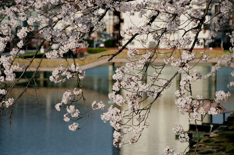 丸亀城の堀にかかるもう一つのピンクの橋