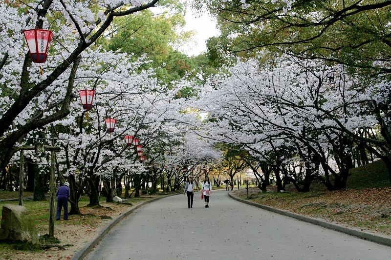 お城の周りの道は桜並木