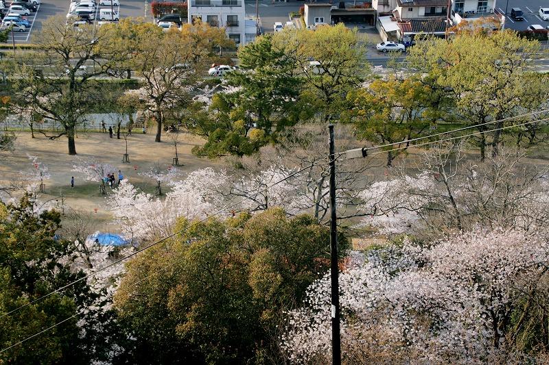 桜の広場を上から見る