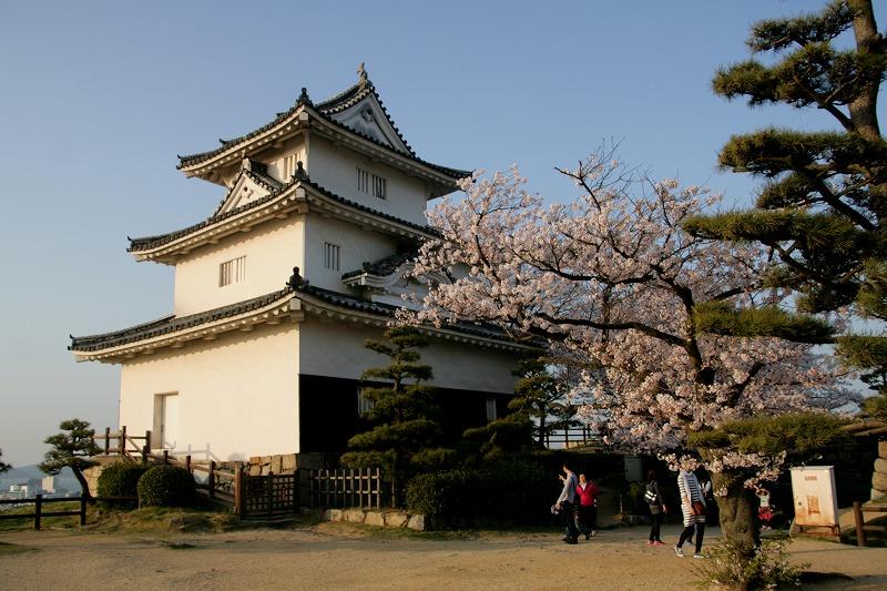 桜 with 丸亀城天守
