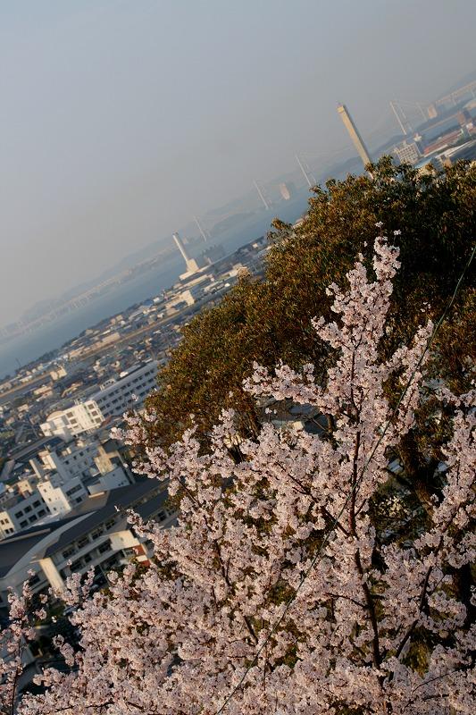 桜 with 瀬戸大橋