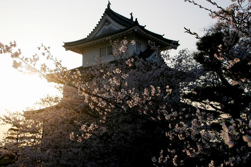 桜 with 丸亀城
