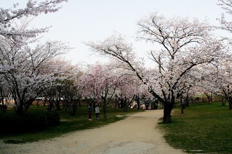 「二の丸」の広場には桜が咲き乱れています
