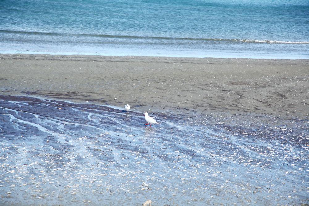 水鳥がいます