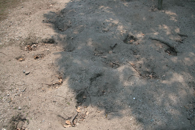 島中にはこんなウサギの掘った穴がいっぱい