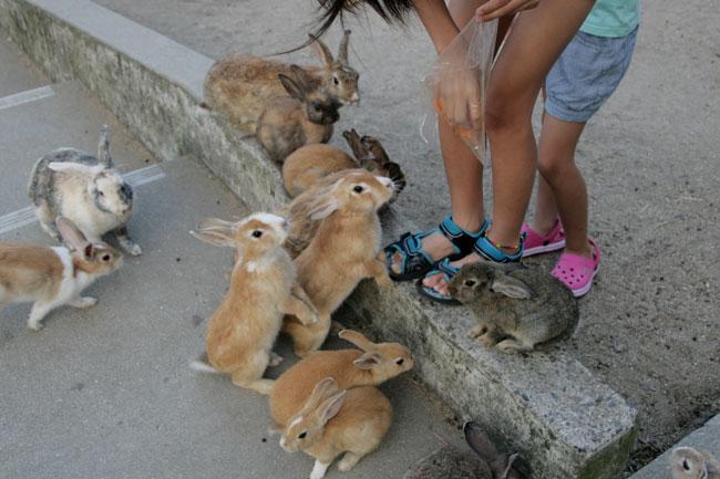 ウサギについていろいろ教えてくれる