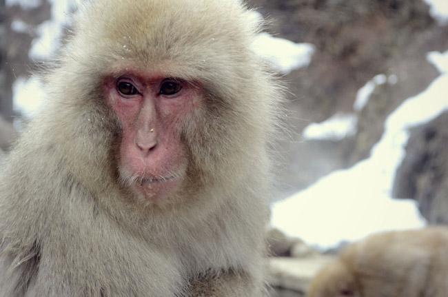 猿とは関係ない