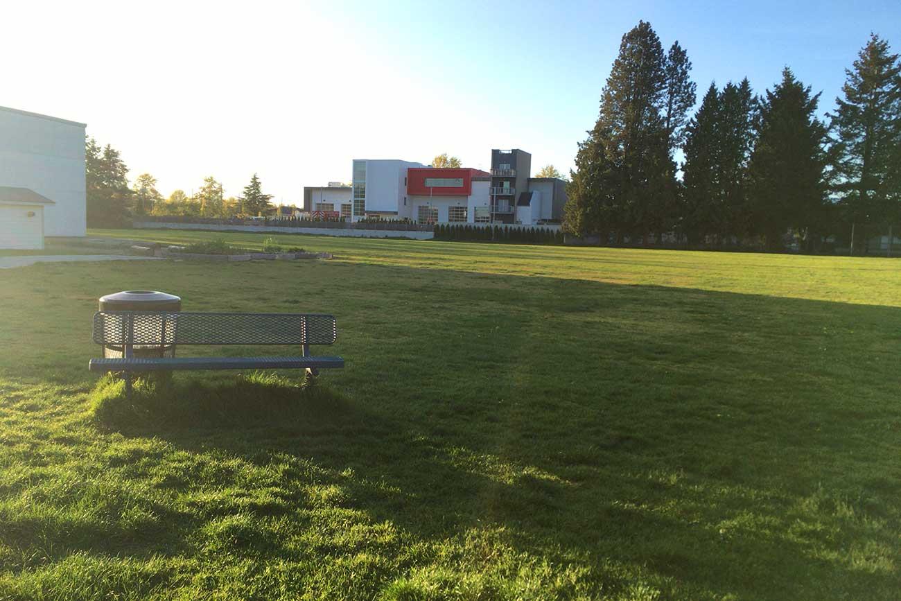 運動場が芝生