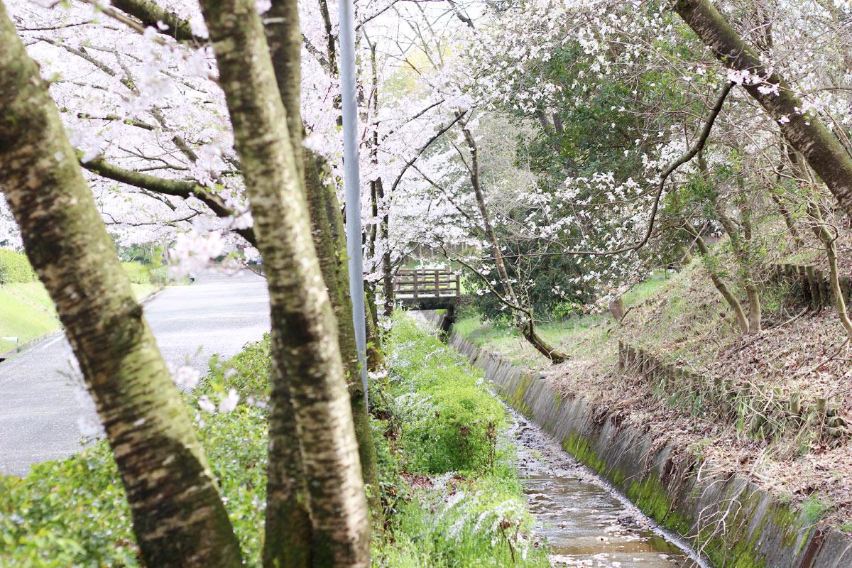 道沿いに川と橋もあります