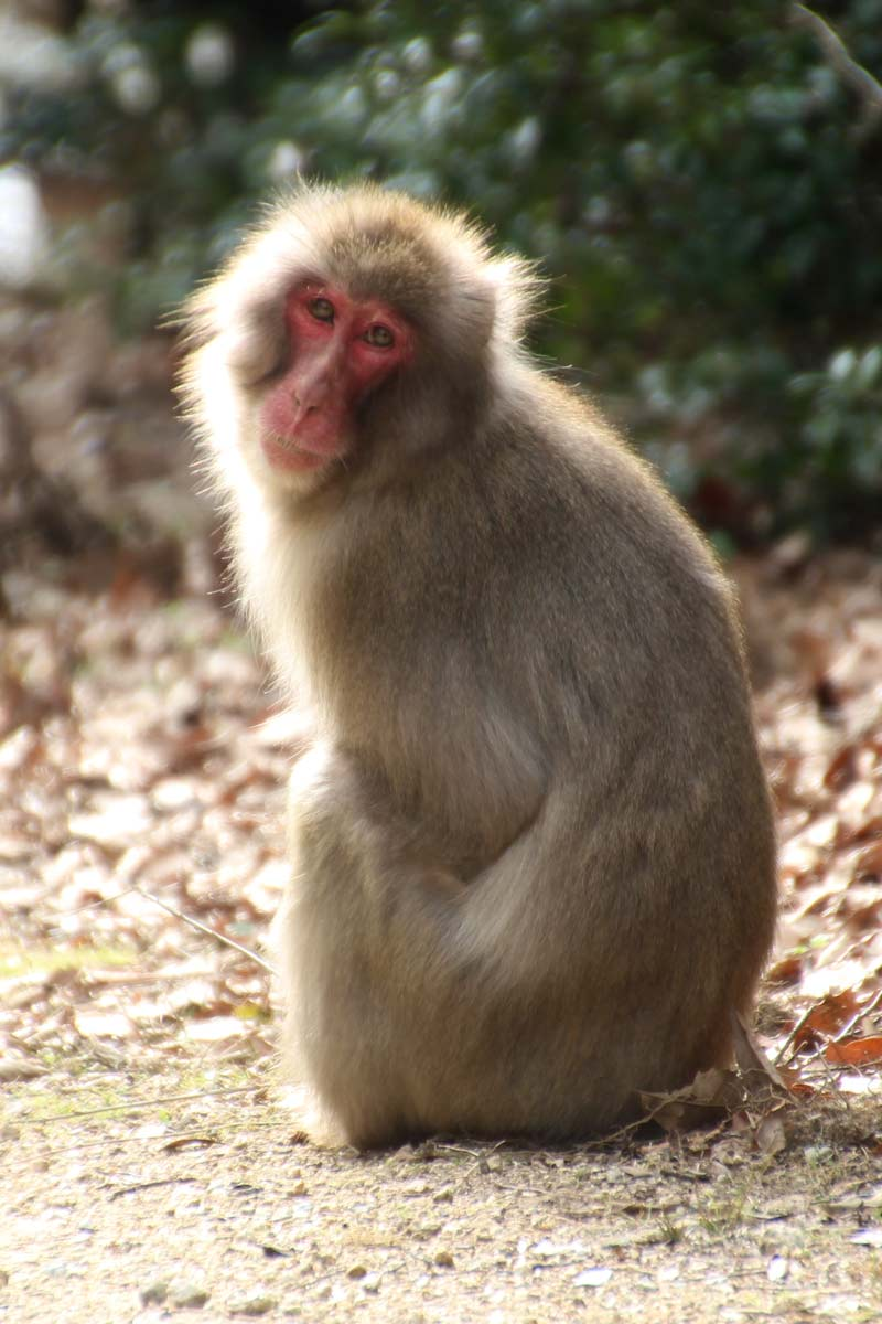 かわいい猿がいたよ!