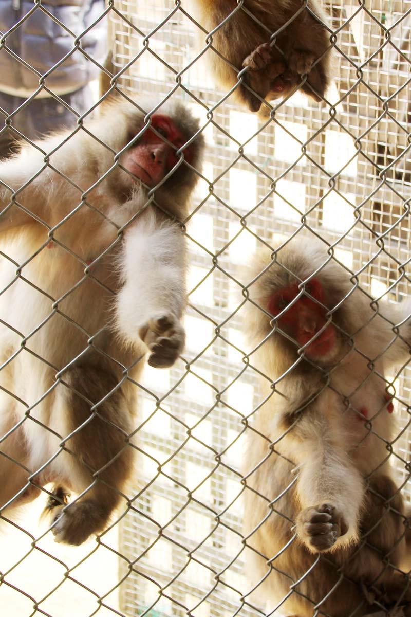 小屋の中から猿を見た写真
