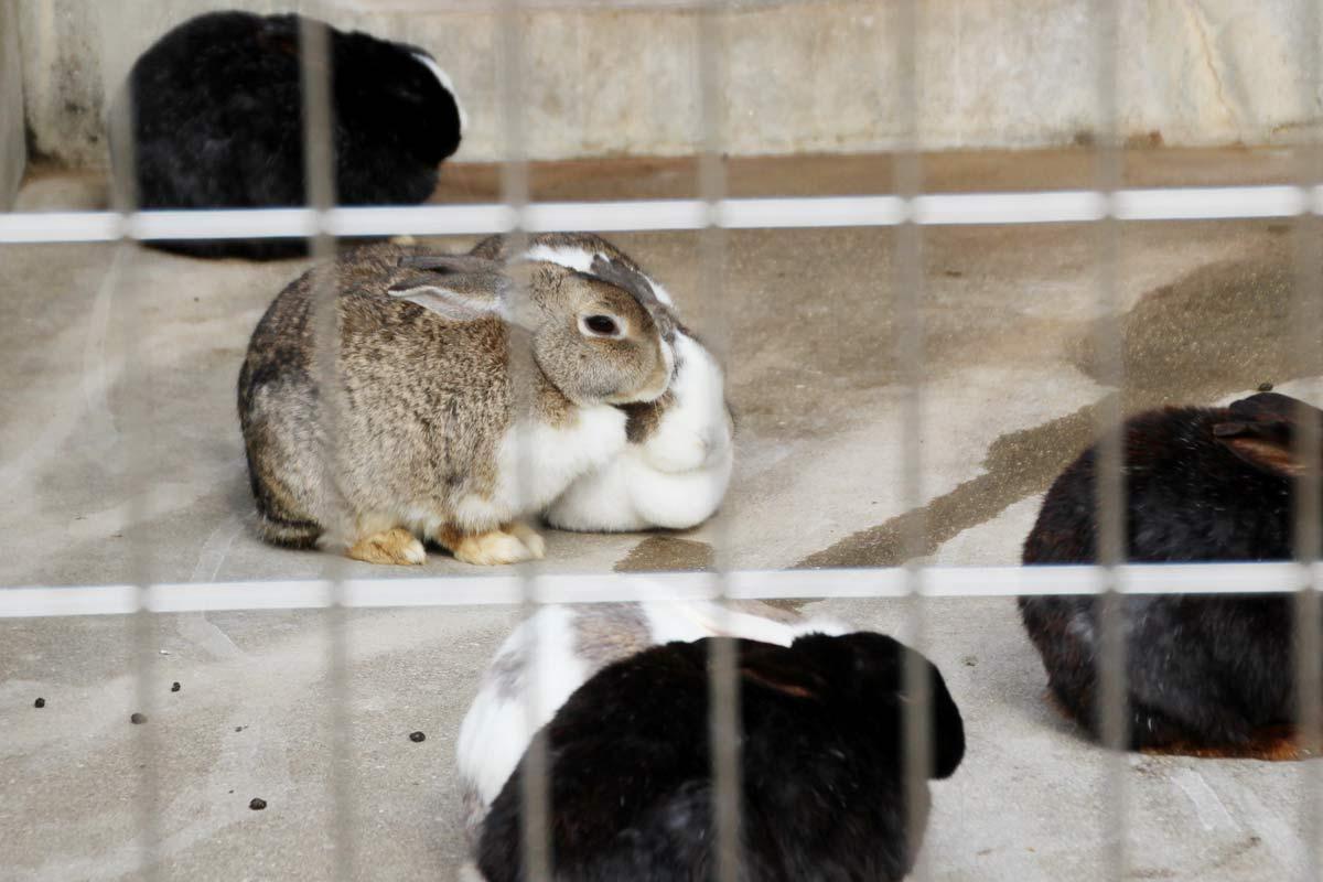 ウサギもいました