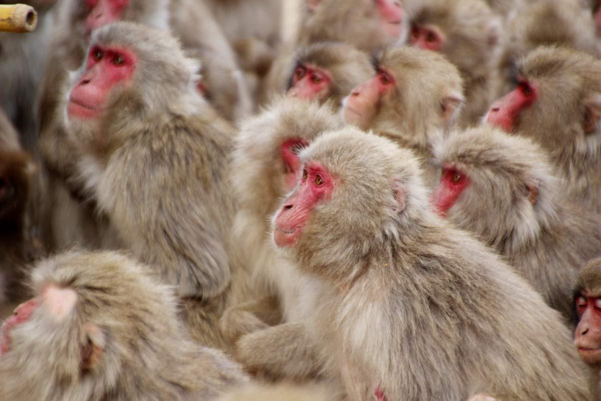 豆を狙っているお猿たち